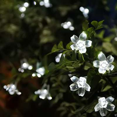 some pretty white flower fairy lights